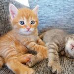 Pisicile socializeaza