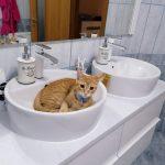 Avantaje gazduire la Hotel Pisici